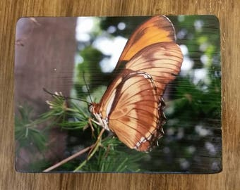 Brown Butterfly Photo Wood Block