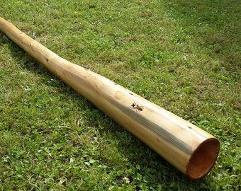 Thuja E/F didgeridoo