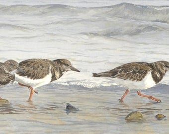 Tide Race, turnstones bird print