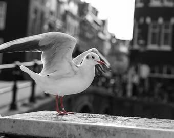Gull BWR