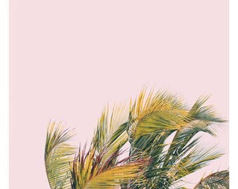 Nature Photograph - Palm Tree - Tropical Art - Travel Photograph - Like A Hurricane - Fine Art Photo -California - Florida - Oversize Art