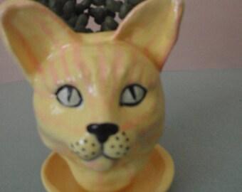 Butter Cat