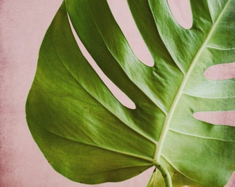 Tropical leaf wall art botanical photography pink and green living room home decor 'Monstera Pink One'
