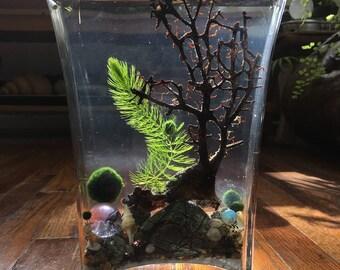Zen Live Marimo Moss Ball Tall Fan Vase Mini Aquarium/Terrarium