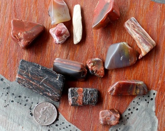 5 oz. lot of tumbled petrified wood pieces red and black for display and curiosity cabinets