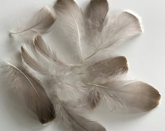 LOOSE  Wild Turkey Feathers , Natural, not dyed  /  750 - A