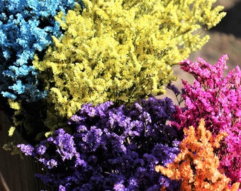 Sinensis bunches in 10 assorted colors-Dried floral bunches-Tiny flowers