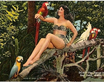 Vintage Florida Postcard - A Pin Up at Parrot Jungle, Miami (Unused)