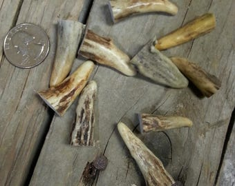 Gnarly Deer Antler Points Tips - 1-1.5 Inches - 10 Pieces - Lot No. 170320-AA