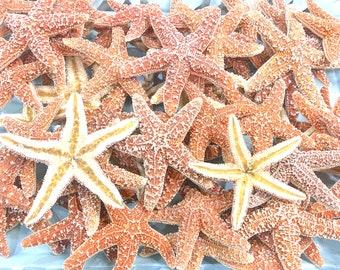 "Starfish - 3 Natural Sugar Starfish 3""-4"" *Top Quality* Beach Decor Star Fish Bulk Beach Wedding Coastal Nautical Real Starfish"
