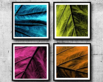 COLORFUL LEAF SET of 4 - elephant ear leaves - photo art prints - magenta, blue, orange, green botanical art for home or office - leaf decor
