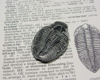 Fossil Elrathia Kingi Trilobite Cabochon from Utah, Lapidary Supply, Jewelry making 33 mm 13T118 G