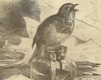 Young Robin Perched on Inkwell Original Black & White Print Bookplate from 1882 Chatterbox Book – Harrison Weir Image