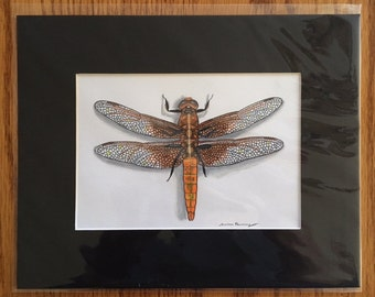 Hand Drawn Flame Skimmer Dragonfly 8 x 10