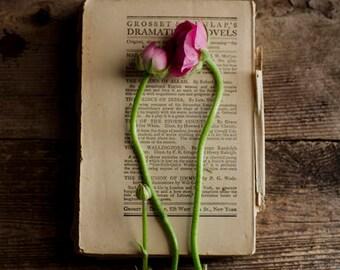 rustic home decor, ranunculus art, vintage book art, floral nursery decor, pink flower art, office decor, farmhouse decor, chic floral art