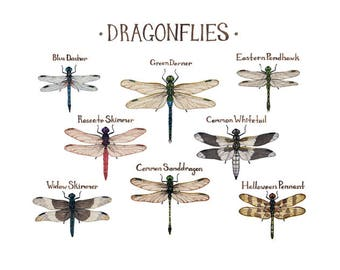 Dragonflies Field Guide Art Print / Insect Collection / Watercolor Painting / Wall Art / Nature Print / Dragonfly Art