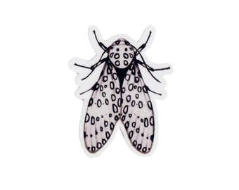Giant Leopard Moth Magnet / Insect Collection / Nature Art / Refrigerator Magnet / Office Magnet / Party Favor / Small Gift