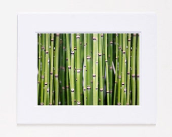 Bamboo Fine Art Photography Print SALE