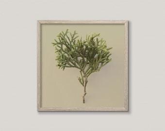 NATURE WATCH NO.3 | Modern rustic decor | green and taupe | minimalist plant photography | macro botanical art print | square print wall art