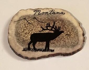 Elk horn magnet.