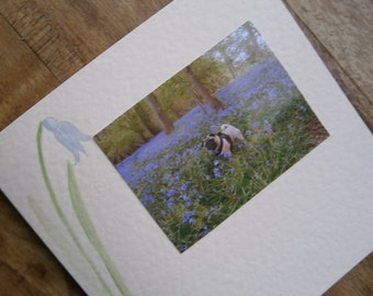 Springtime Pug card.Individually made with original Bluebell illustration
