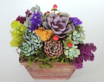 Succulent Arrangement- Green Gift