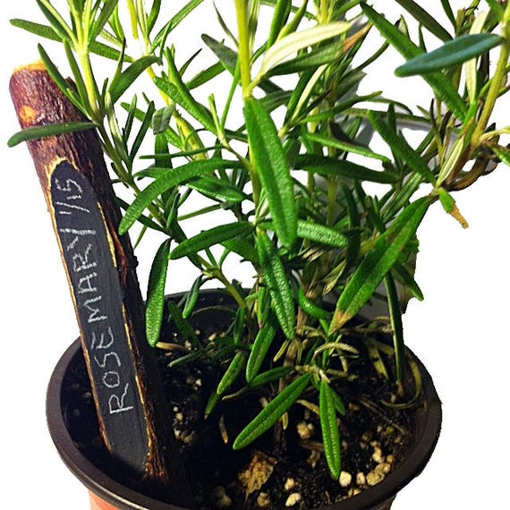 Apple Pencil - Garden Plant Marker and Stakes Tin Set