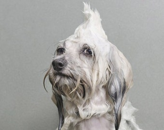Organic natural dog shampoo