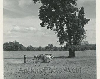Farmer plowing on horses vintage photo