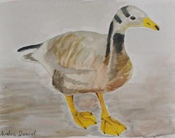Bar Headed Goose - Original Watercolour Painting - Animals - A5