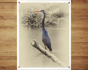 Great Blue Heron - Limited Edition