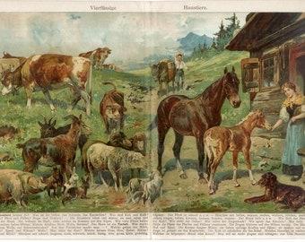 Farm animals dog horse sheep pig Antique Chromolithograph Print Authentic print decorative art German Encyclopedia natural history fold out
