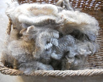 """Clearance--Georgeous Grays 1 LB. Unwashed Raw Wool Locks, Silver and Grays Heather Tips, 6""""-7"""""""