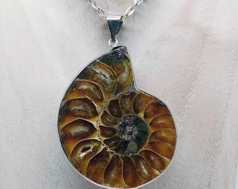 Ammonite fosil pendant, ammonite necklace