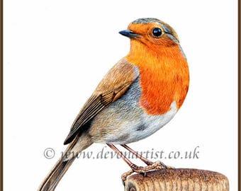 Robin, Bird Watercolour, Original Bird Painting, Robin in Watercolor, Bird Artwork, Wildlife Bird Art, Bird Watcher Gift