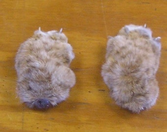 2 Preserved Front Kansas Bobcat Paws