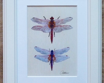 Dragonfly Painting Dragonfly Picture Dragonfly Wall Art Dragonfly Furnishing Dragonflies Room Decor Dragonflies Duo a beautiful gift choice