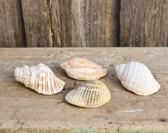 Vintage Shell Collection