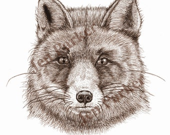 Red Fox Pen Drawing Giclée print A4