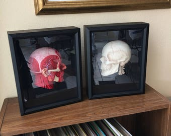 Anatomical Studies In Shadowbox