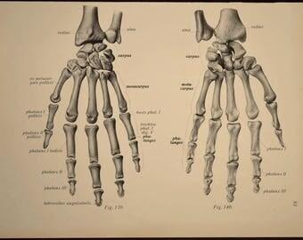 Skeleton Print Human Wall Art Medical Wall Decor Anatomy Hand