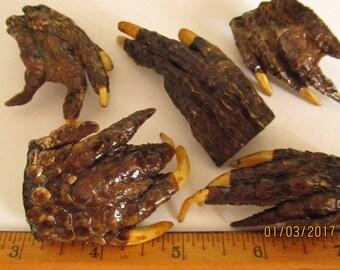 Alligator Claw Specimen Taxidermy Charm
