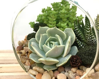 Woodland Succulent Terrarium Kit-Rustic Home Decor-DIY Gift-Floral Arrangement-Thank You Gift-Gift for Him-Succulent Gift-Housewarming Gift