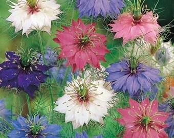 Love in a Mist Mix Flower Seeds (Nigella Damascena) 50+Seeds