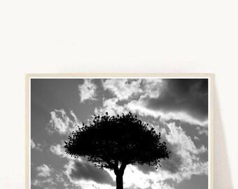 Tree Print, Printable Wall Art, Nature Print, Black and White Photo, Tree Photo, Abstract Print,  Downloadable, Modern Wall Art, Wall Decor