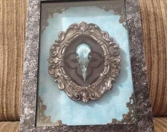 Painted Pigeon Skull Shadowbox