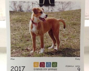 2017 Desk calendar \ Animal calendar\ CAt calendar \ Dog calendar\ Cat lover gift \ Cats lover gift