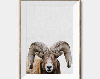Big Horn Sheep, Bighorn Sheep, Sheep Prints, Sheep Art, Sheep Posters, Mountain Sheep, Sheep Photography,Farm Animal Art, Digital Download