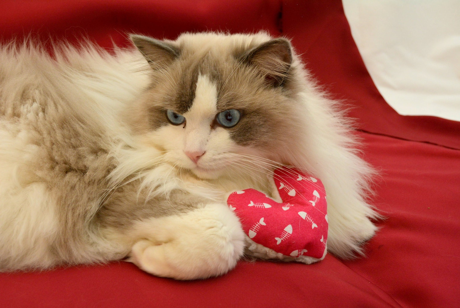 For Valentine S Day Cat Toys : Catnip silvervine cat toy valentine heart cotton and