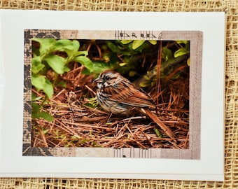 Song Sparrow note card